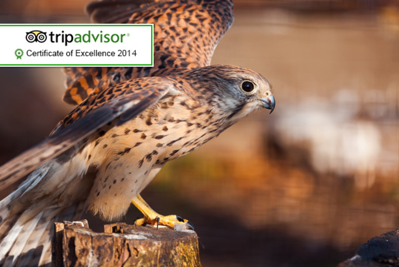 £29 instead of £70 for a 1-hour 'Hawk Walk' birds of prey experience for 2 people at Stockley Farm, Cheshire - save 59%
