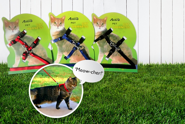 £5.99 instead of £19.99 (from The Treasure Chest) for a cat lead and harness, or £9.99 for two - save up to 70%