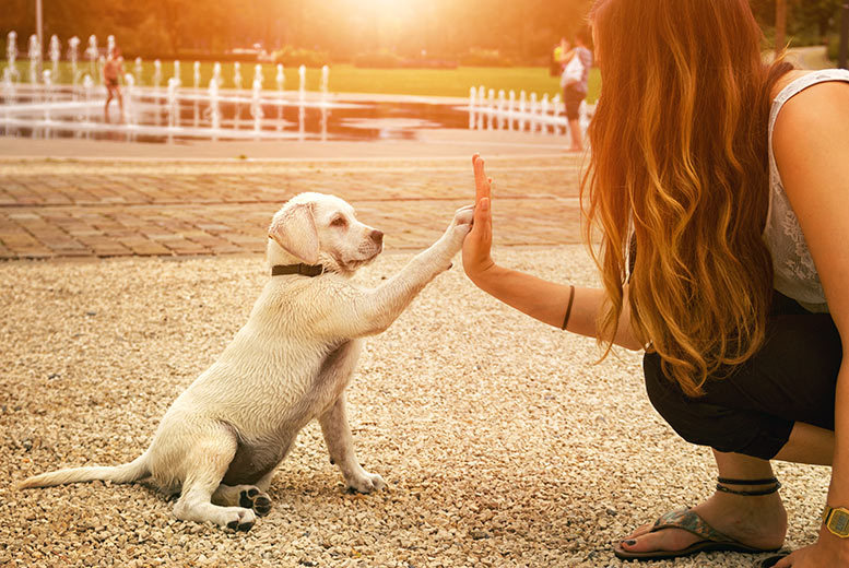£16 instead of £299 for a dog behaviour and training course from International Open Academy - save 95%