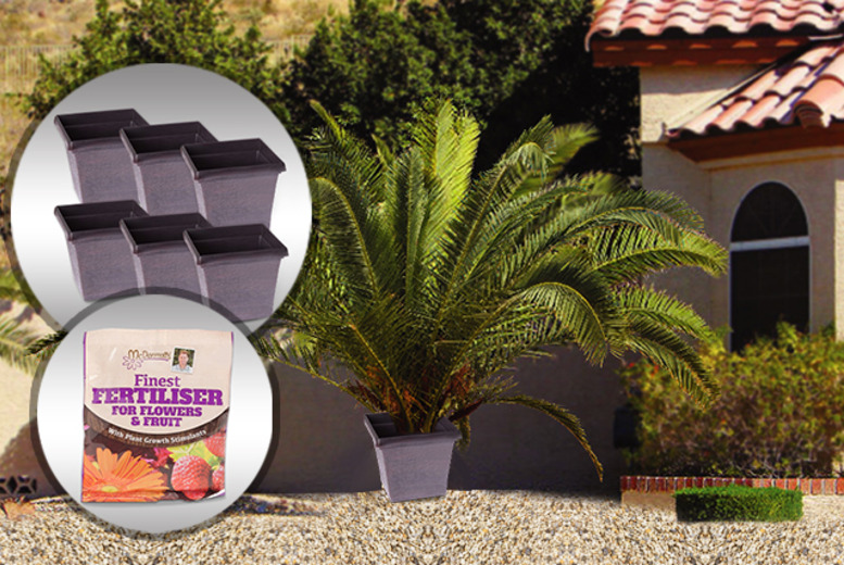 £15.99 instead of £27.97 (from You Garden) for 2 Canary Island palm trees, 6 metallic finish plant pots and 50g of fertiliser - save 43%