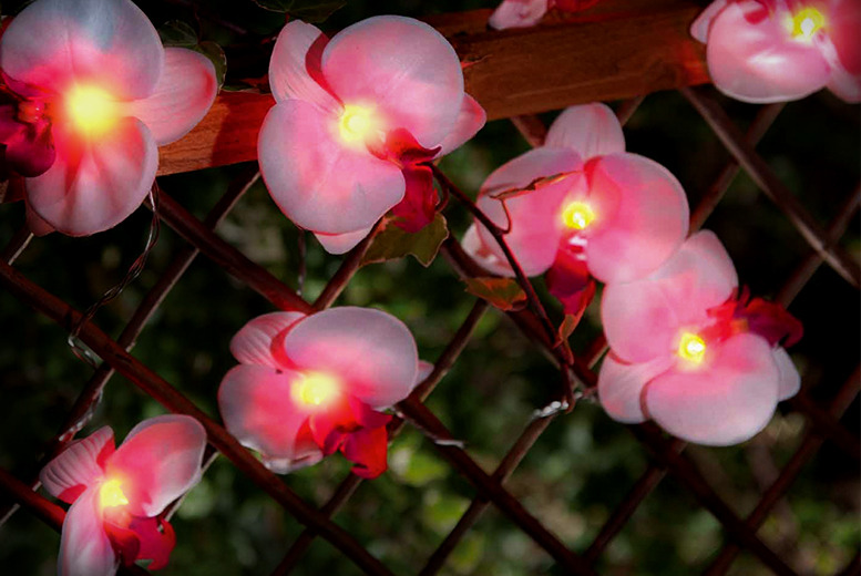 £6.99 instead of £17.99 (from Safield Distrubutions) for a set of 12 solar orchid garden lights - light up this summer and save 61%