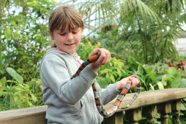 £17.50 instead of £34.95 for an animal experience for one person, £35 for two or £69 for a family of four at the Tropical Butterfly House, North Anston - save up to 50%
