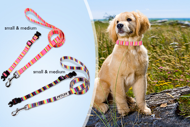 £4.99 (from Eden. H Ltd) for a small rainbow dog collar and lead, £5.99 for a medium-sized collar - save up to 50%