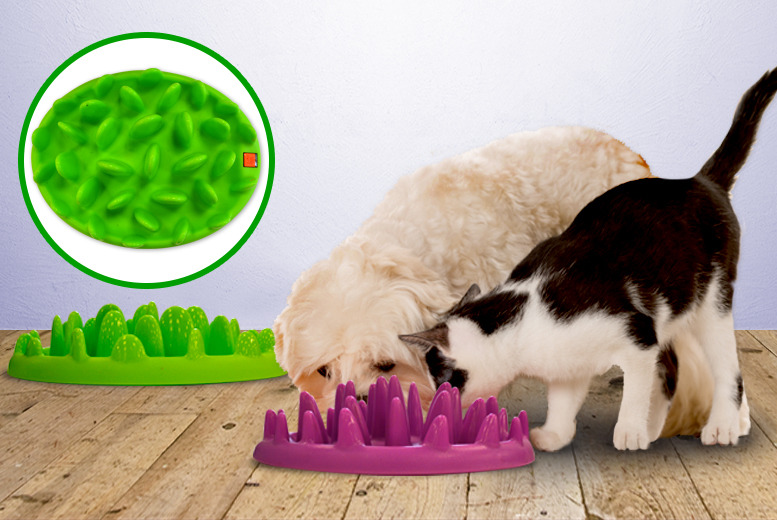 £14.99 instead of £33.98 for a small dog or cat feeder, or £18.99 for a large dog feeder from Wowcher Direct - save up to 56%