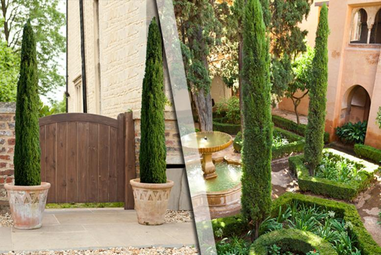 £17.99 instead of £29.99 (from You Garden) for a pair of Italian cypress trees - save a blooming great 40%