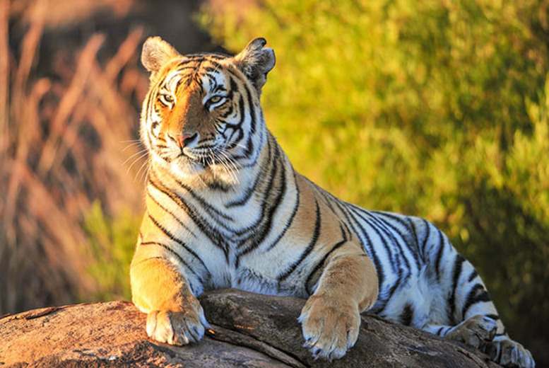 £49 for a child coach trip tkt to Longleat Safari & Adventure Park inc. access to Longleat House, £59 for an adult tkt - save up to 61%