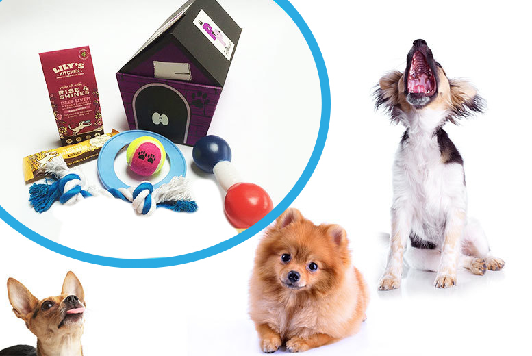£8 instead of £18 for a toy and treat five-item surprise hamper for dogs from Pet Presents - spoil your special pet and save 56%