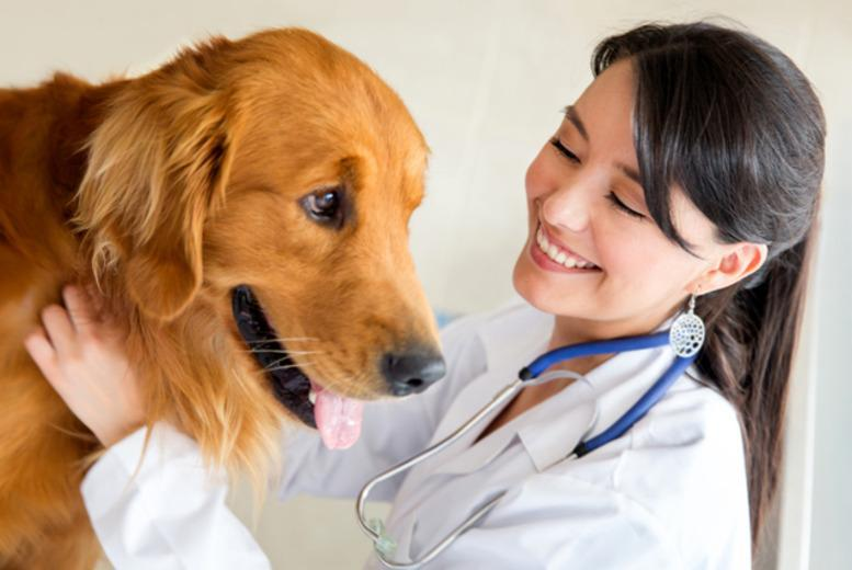 From £15 for a pet vaccine, or from £30 for pet neutering at a choice of 33 Best Friends Veterinary Group surgeries across the UK - save up to 65%