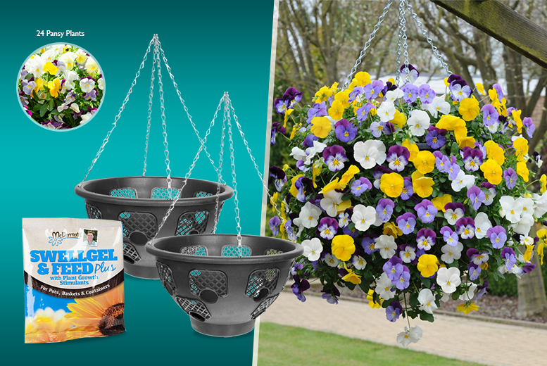 £19.99 instead of £42.96 (from You Garden) for a pair of Easy Fill hanging baskets, 24 trailing pansy plants & gel and feed fertiliser - save 53%