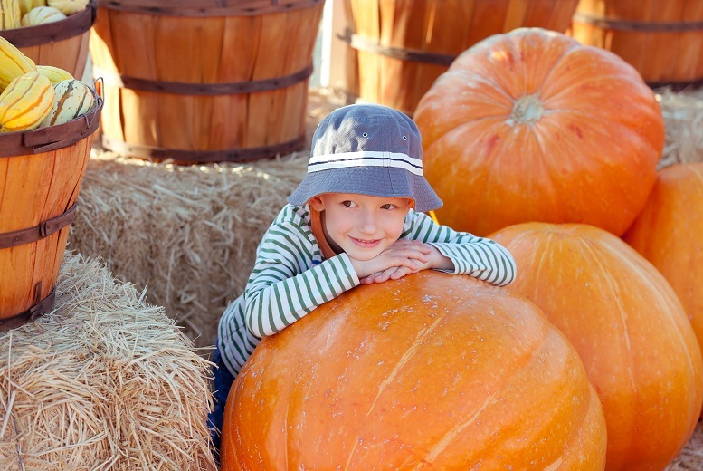 £7 instead of £14 for a family Halloween activity day at Lower Drayton Farm, West Midlands - save 50%