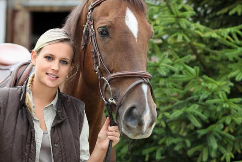 £49 for five 30-minute private horse riding lessons inc. hat and boot hire, £98 for five 60-minute lessons at Brimington Equestrian Centre - save up to 58%