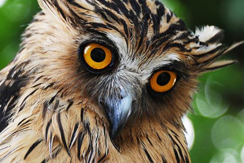 £14 instead of £30 for a 1-hour 'It's a Hoot' Owl Encounter for 1 person, £21 for 2 people at Stockley Birds of Prey - save up to 53%