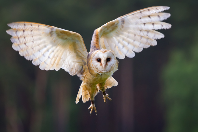 £19 for a half-day owl experience for 1 person inc. mince pie and hot chocolate, or £29 for 2 at the Birds of Prey Centre, Bedford - save up to 60%
