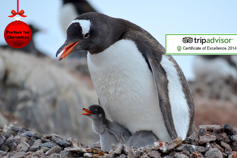 £60 instead of £99 for a private penguin feeding experience for one person, or £99 for two at Paradise Wildlife Park, Broxbourne - save up to 39%