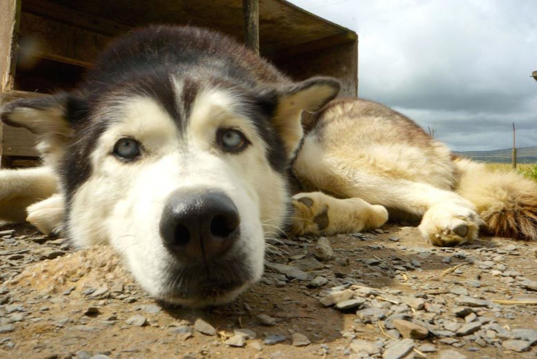 £199 instead of up to £340 for a two-night Lake District break for two people with husky sledding and breakfast at Horse and Husky, Bootle Station - save up to 41%