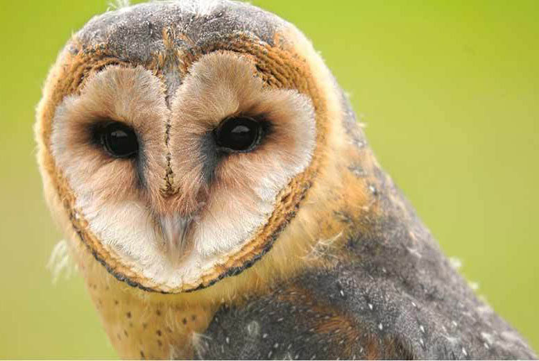 £15 instead of £35 for an annual bird adoption, £18 for a two-hour owl experience for one, £34 for two people at the North Somerset Bird of Prey Centre - save up to 57%