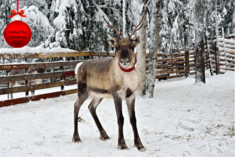 £19 instead of £66.49 to adopt a reindeer and get a one-day family pass to the zoo from South Lakes Wild Animal Park - save up to 71%