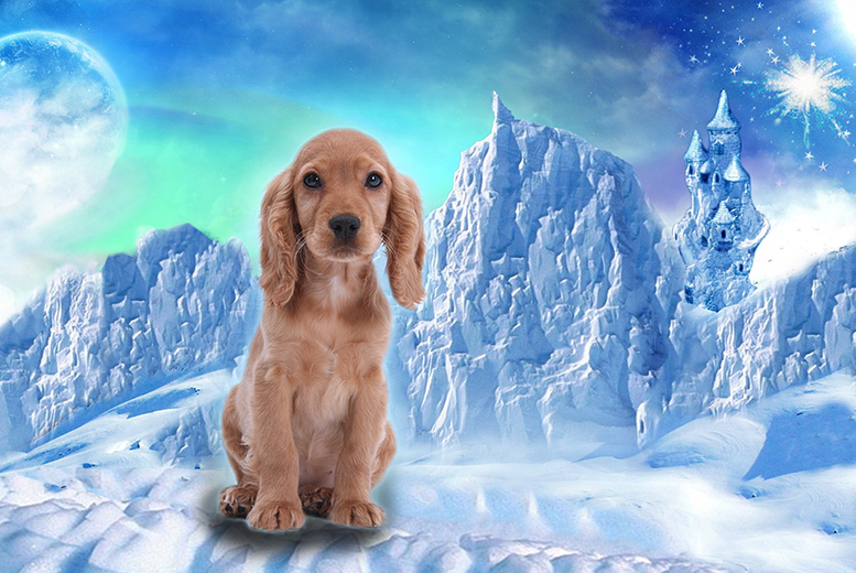 £7.99 instead of £29.99 (from Superstar Pets) for a personalised Frozen-inspired pet movie - make your pets sing and save 73%