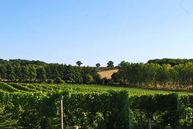 £55 for a vineyard tour and wine tasting, two-course lunch and a bottle of wine for two people at Chilford Hall, Cambridge from Buyagift