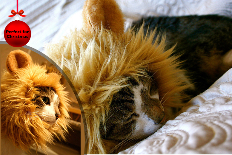 £8 instead of £19 (from Aven Republic) for a cat lion mane wig - get kitty the purrfect Christmas present & save 58%