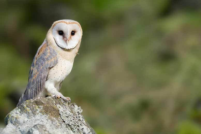£79 for a two-night Yorkshire break for two (at The Burn Hall Hotel York) with breakfast and tickets to York Bird of Prey Centre - save up to 52%