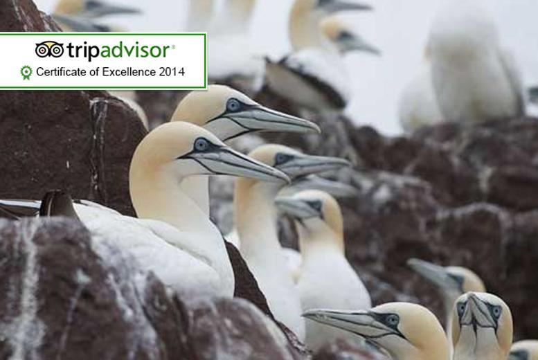 £6 instead of £17.90 for entry for 2 adults to the award-winning Scottish Seabird Centre, or £10 for a family of 4 - save up to 66%