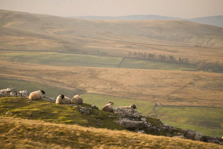 From £89 (from The Fat Lamb) for a two night stay for two people with breakfast