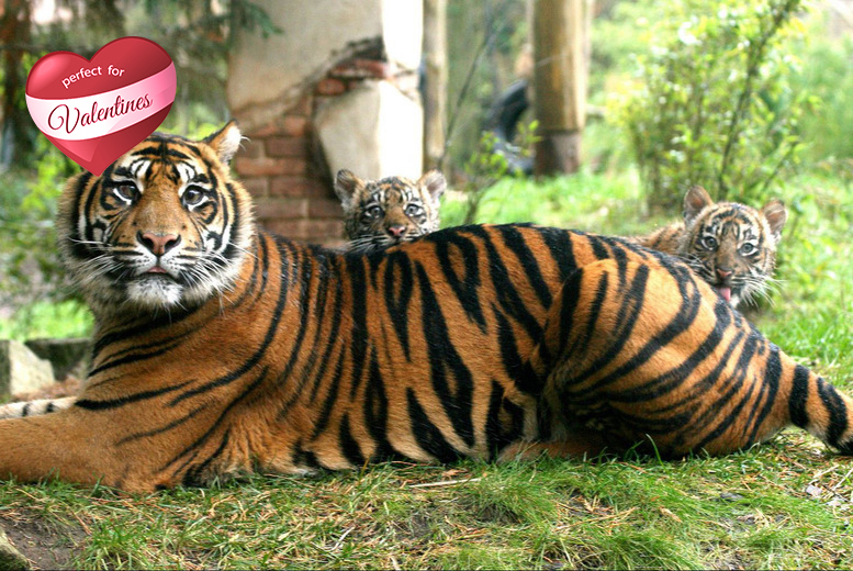 £75 instead of £125 for a 2-hr behind-the-scenes animal tour for up to 4 people at Chessington World of Adventures – save 40%