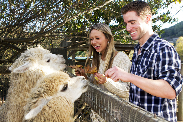£6 instead of £11 for entry to The Llama Park for one adult and one child, or £10 for entry for two adults and two children - save up to 45%