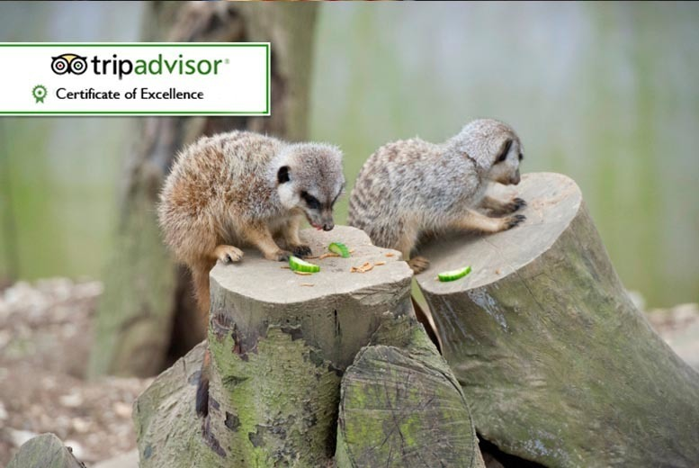 £27 instead of £60 for a 'meet the meerkat' experience for two people at Bridlington Birds of Prey and Animal Park - save 55%