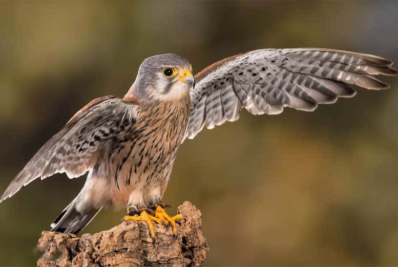£16.50 instead of £27.50 for a family admission ticket to Liberty's Owl, Raptor and Reptile Centre, Hampshire – save 40%