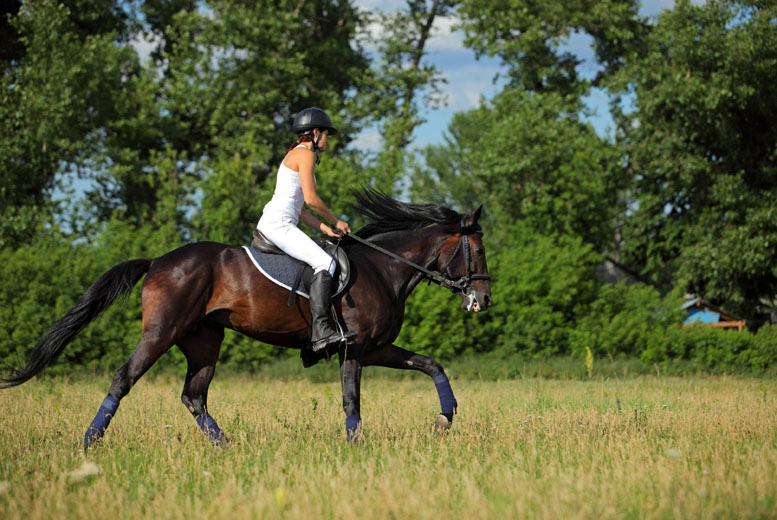 £12 instead of £25 for a one-hour horse riding lesson at Cabin Equestrian Centre, Inverurie - save 52%