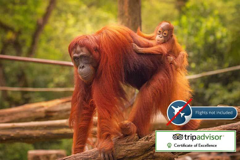 From £249pp for an eight-night Sumatran wild orangutan and tiger tour including accommodation, selected meals and tour guide - save up to 47%