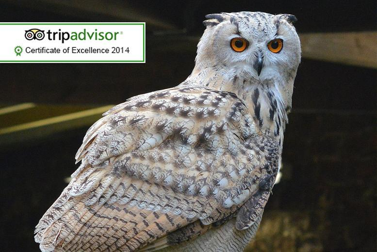 £9 for entry to the Scottish Owl Centre for 2 people, £17 for 4 or £25 for 6 - have a hoot and save up to 40%