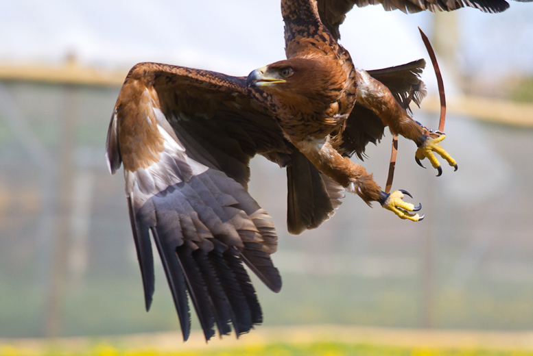 £12 instead of £26 for a guided tour and birds of prey experience for 1 person, £22 for 2 at Millets Falconry Centre, Oxfordshire - save up to 54%