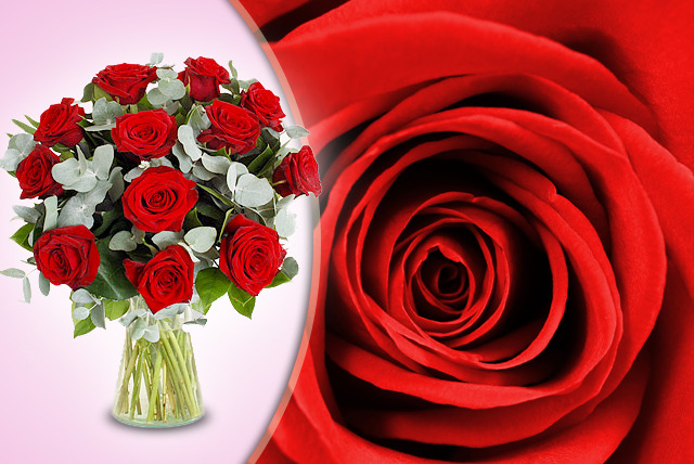 £24.99 instead of £65 (from Flowers & Plants Direct) for a luxury bouquet of 12 red roses - treat your Valentine & save 62%