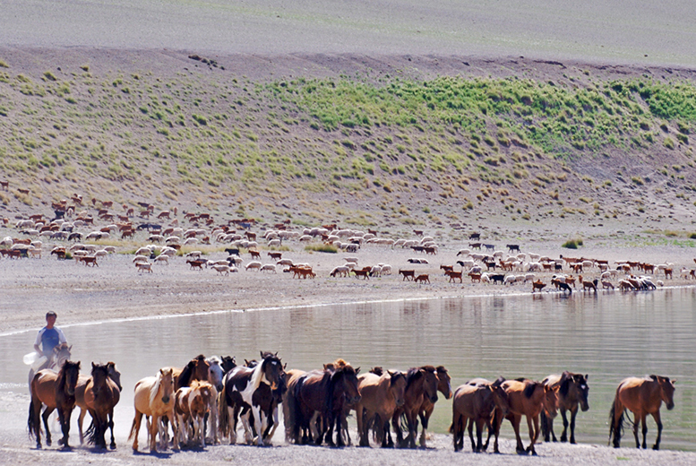 £1499 (from Dragoman) for a 21-day wilderness and cultural tour of Mongolia including yurt camping, hot springs visit, hiking and more!