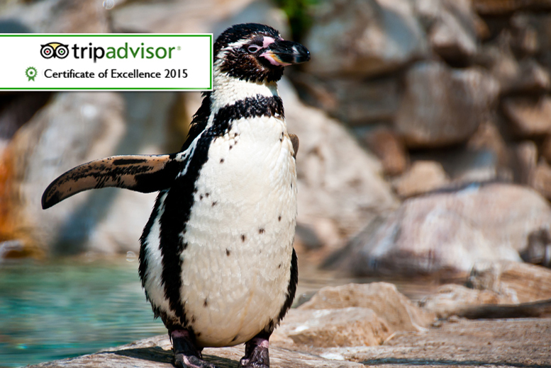 £89 for a one-hour 'Meet the Penguins' experience for two people including entry to Exmoor Zoo from Activity Superstore!