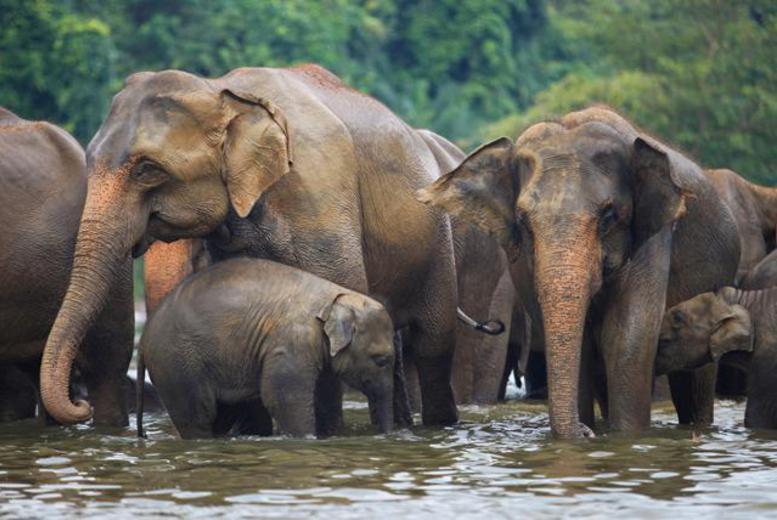 elephant deals slp