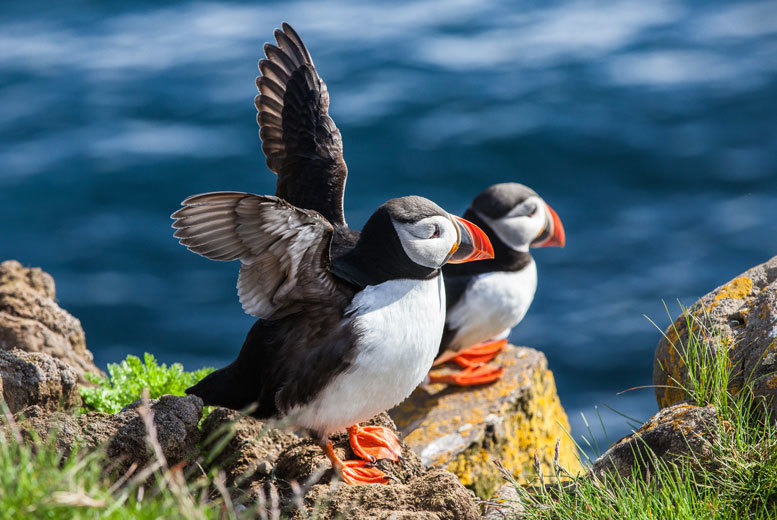 £21 instead of up to £35 for a 1½-hour powerboat tour of Puffin Island with Seawake Boat Tours, Isle of Anglesey - save up to 40%