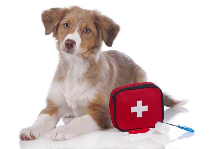 £19 instead of £45 (from Vet Nurse Direct) for 12 months' access to an online canine first aid diploma course - save 58% and maybe even your dog!