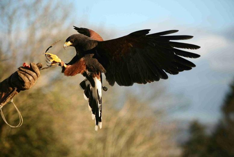 £24 instead of £63 for a 2-hour bird of prey experience at Raptor World, Fife - save 62%