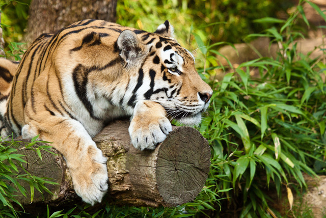 £99 instead of £199 for a 'Shadow a Zookeeper' day at Paradise Wildlife Park, Broxbourne - save 50%