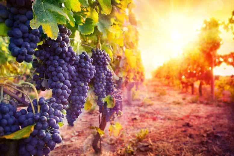 £33 for a vineyard tour and tasting session for two people from Activity Superstore - choose from twelve locations!