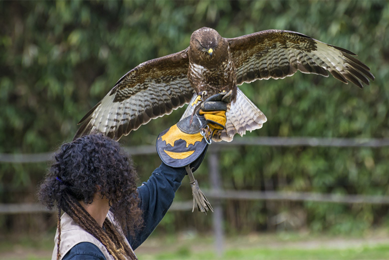From £11.90 for a hawk walk experience, from £17.90 for a half-day falconry experience at York Bird of Prey Centre - save up to 60%