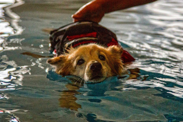 £10 instead of £28 for a canine hydrotherapy fitness session at Fit Paws Hydrotherapy, Spofforth - save 64%