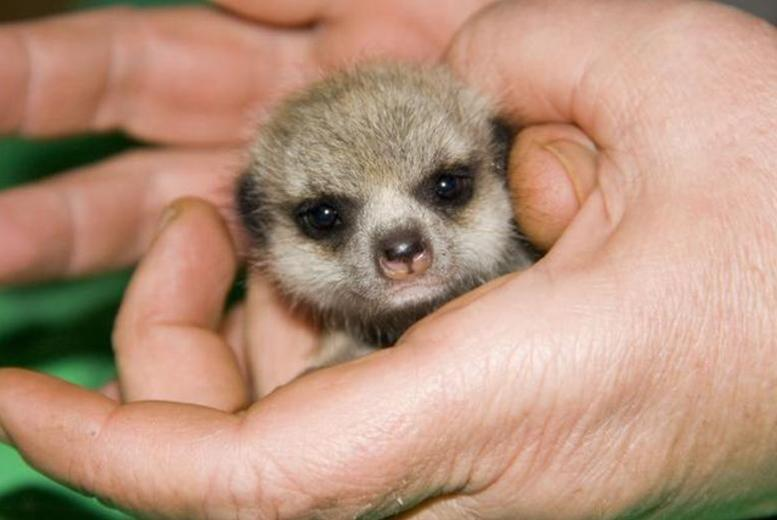 £35 for a meerkat experience for 2, or £65 for a family of up to 5 at Lakeside Animal Park, Telford - save up to 50%
