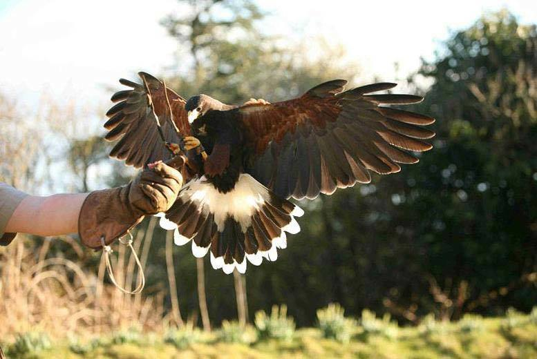 £24 instead of £63 for a two-hour bird handling experience for one person at Raptor World, Fife - save 62%