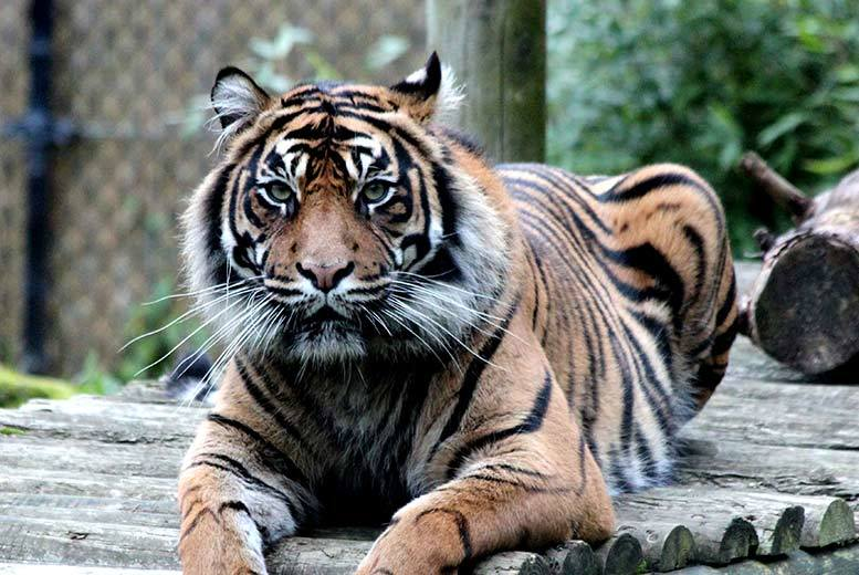 From £69 instead of £125 for a 2-hour behind-the-scenes animal tour including entry to theme park and zoo at Chessington World of Adventures - save up to 45%