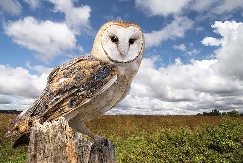 £18 for a 3-hour owls and eagles experience for one person including a hot drink and slice of cake, or £29 for two people at the Birds of Prey Centre - save up to 77%